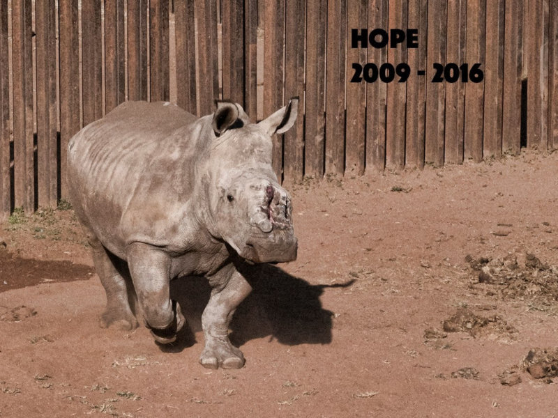 Hope - 2009 - 2016 Forever in our hearts