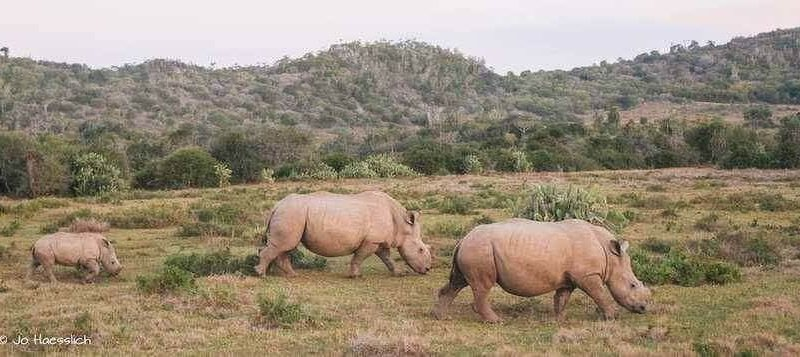 Thandi and her two beautiful calves