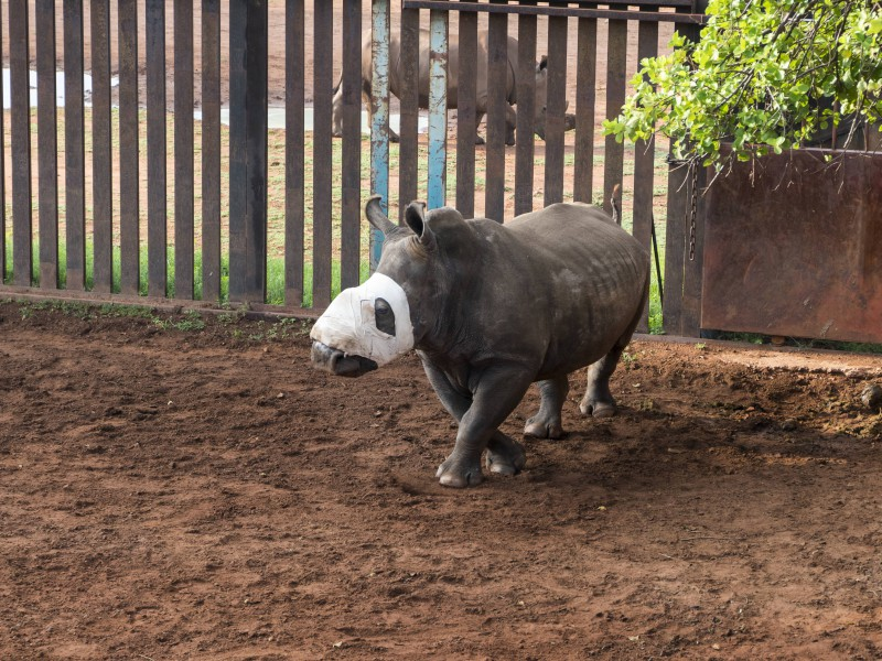 Hope at her new home in Limpopo