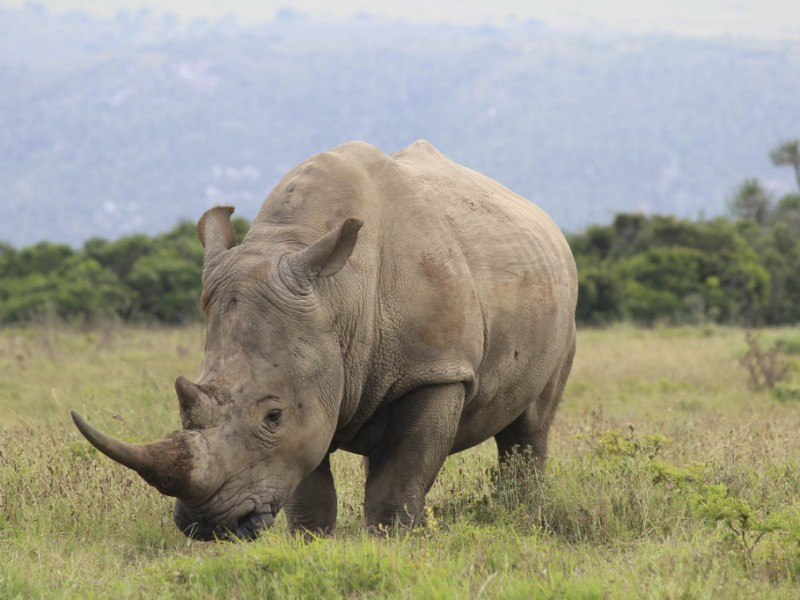 Thandi before she was poached