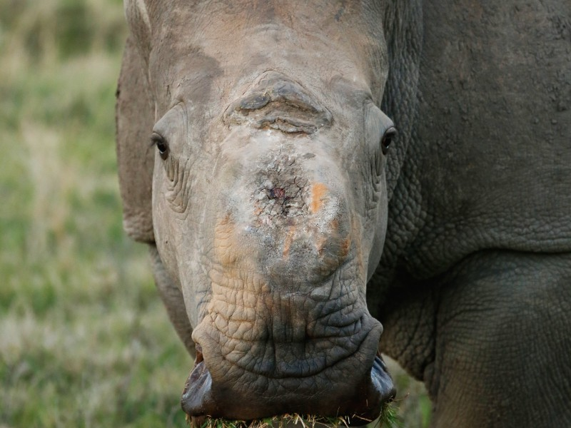 Thandi - one of our first Survivors