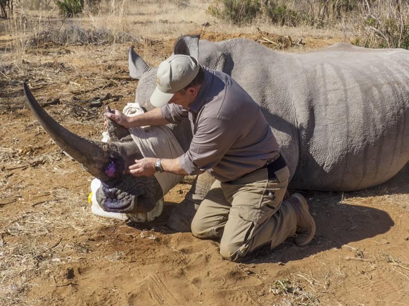 Mel - a very impressive rhino