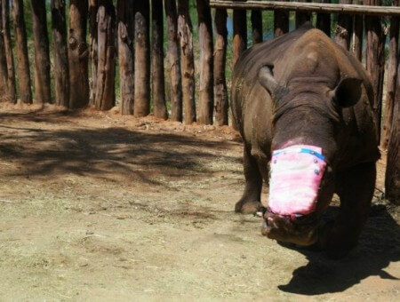 Seha – A day in the life of a rhino poaching survivor