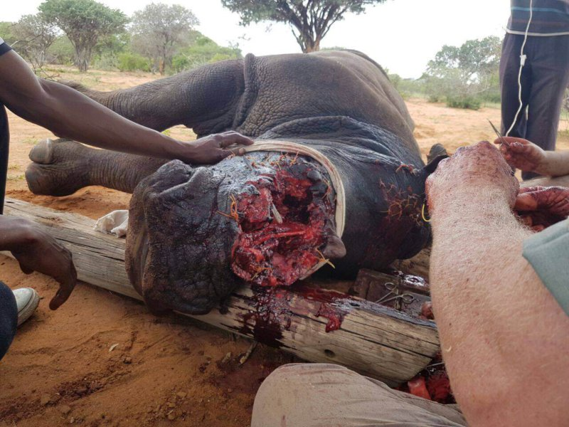 The massive wound poachers inflicted on Vrystaat