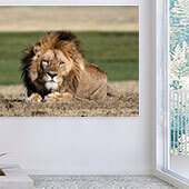 Mastic Lion Wall