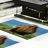 Proud Lion Print