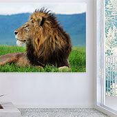 Proud Lion Wall