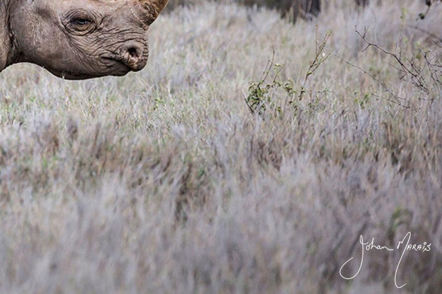 Rhino Signed